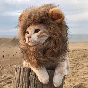 Kitty Apparel